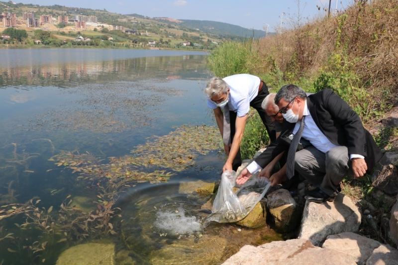 171 bin sazan balığı göletlere bırakıldı