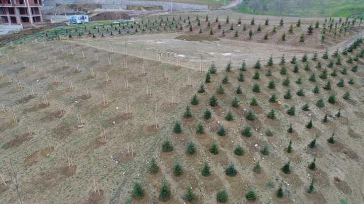 40 bin metrekare alan ağaçlandırıldı