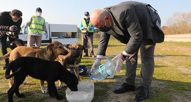 Başkan Bıyık, sokak hayvanlarını eliyle besledi