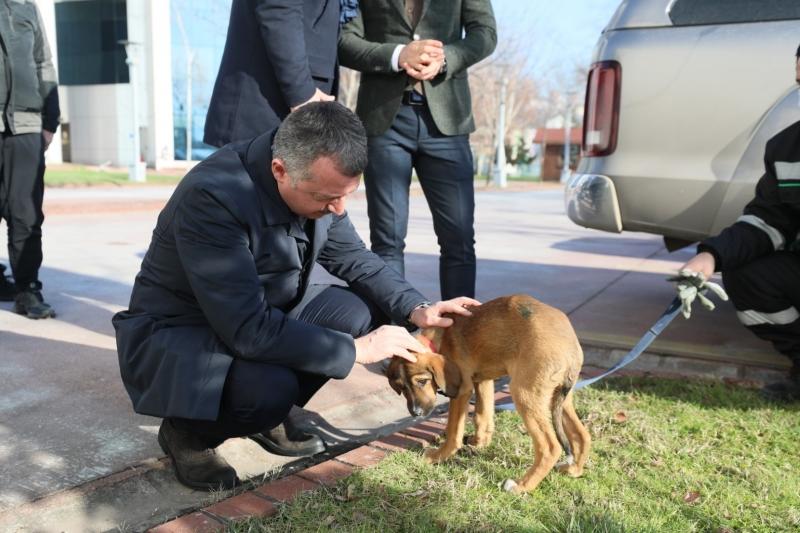 """Başkan Büyükakın; """"Hayvanlara merhamet insan olmanın gereğidir"""""""