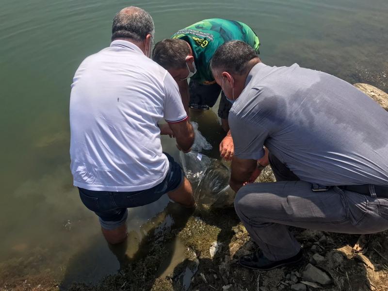 Denizli Göleti'ne Yavru Balıklar Bırakıldı