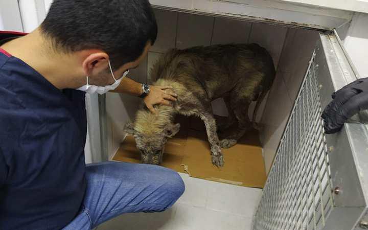 Hasta köpeğin yardımına koştu