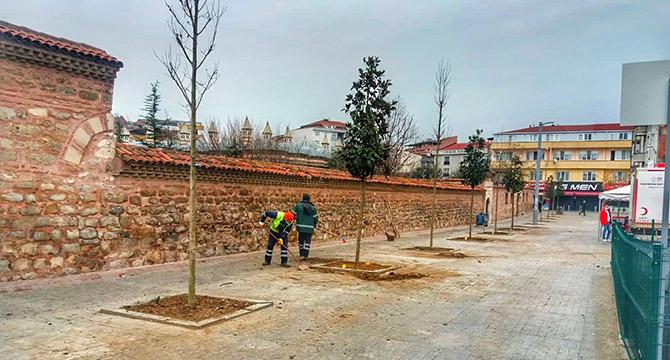 Kent Meydanı Manolya Ağaçları ile Süsleniyor