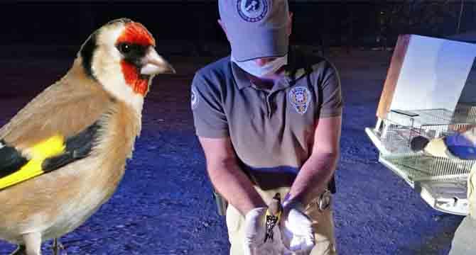 Kocaeli'de yasa dışı avlanan kuşlar doğaya bırakıldı