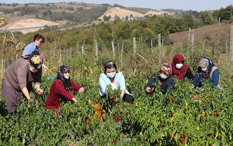 Kullanılmayan tarım arazilerini kadınlara açıyor