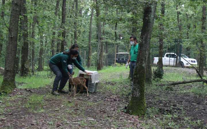 Ormanya, yaban hayvanlarına umut oluyor