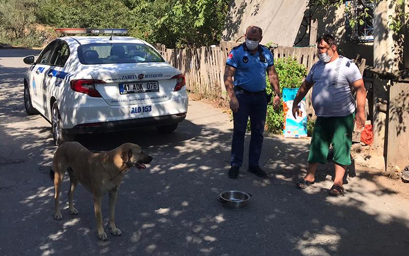 Sahiplendiği köpeğin maması Kocaeli Büyükşehir'den