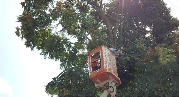 SEDAŞ kaliteli enerji için ağaç budama çalışmalarına ağırlık veriyor