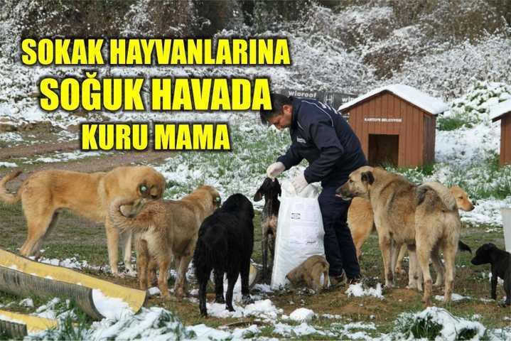 Sokak hayvanlarına soğuk havada kuru mama