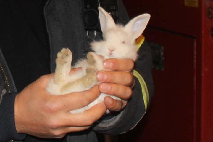 Tavşanı Yakalama Operasyonu