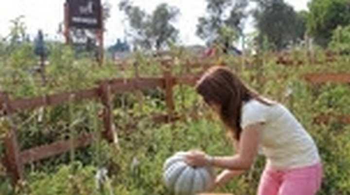Üniversitede Hobi Bahçeleri