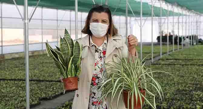 Yaşam Bahçesinde bitkiler daha yeşil bir İzmit için büyüyor