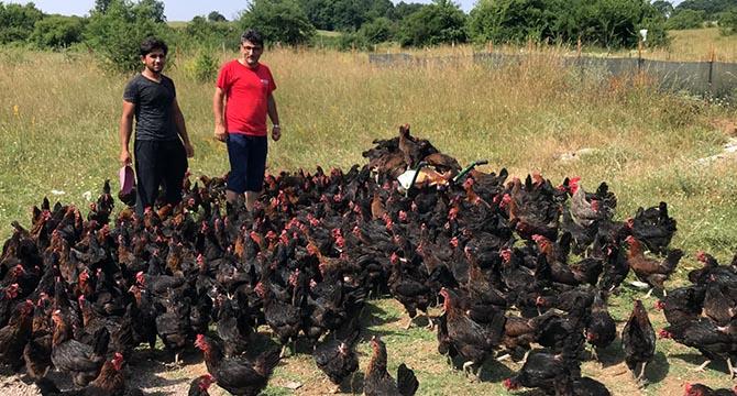 Yüzde 50 hibeli tavuk desteği çiftçilerin yüzünü güldürüyor
