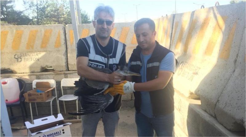 Yaralı Balıkçıkuşa Erken Müdahale