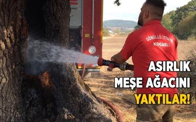 Asırlık meşe ağacını yaktılar!