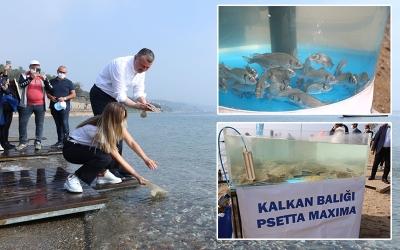 Balıklar bu kez Darıca sahilinden denize salındı