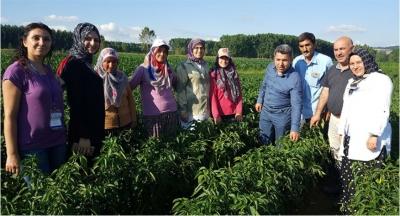 çiftçilere yerli tohum desteği