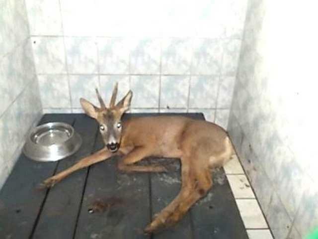 Yaralı hayvanlar tedavi altına alındı