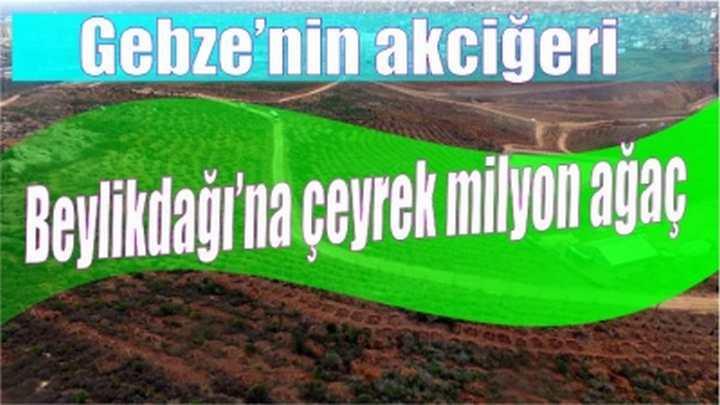 Gebze'nin akciğeri Beylikdağı'na çeyrek milyon ağaç