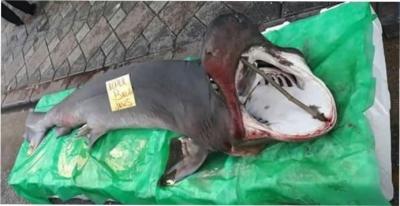Tezgahda köpek balığı ilgi odağı