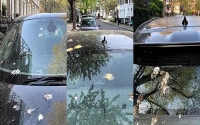 Kuş pisliklerine sıra dışı boya koruma yöntemi