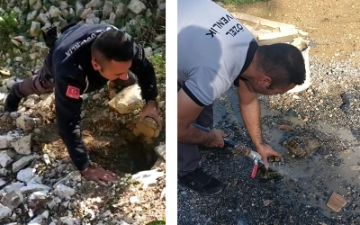 Kuyuya düşen kaplumbağalar kurtarıldı