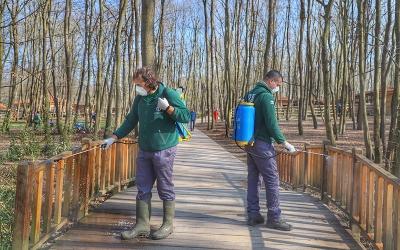 Ormanya ziyarete hazır