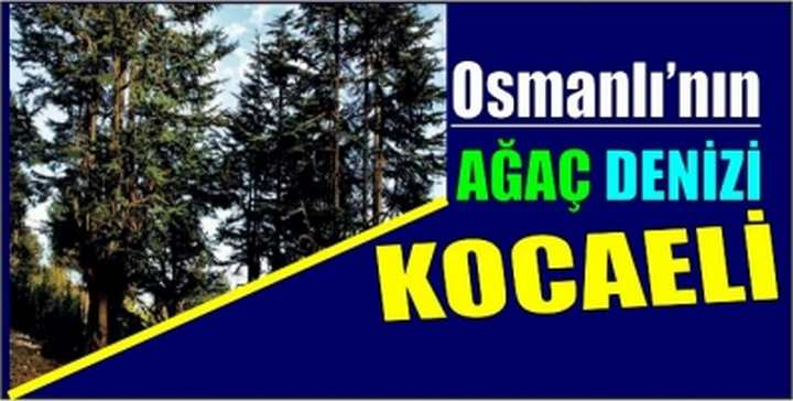 Osmanlı'nın ağaç denizi Kocaeli