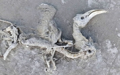 Tuz Gölü'ndeki faciayı anlattı (ÖZEL)