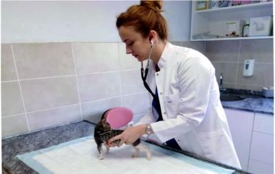 Yavru kediye fıtık ameliyatı yapıldı