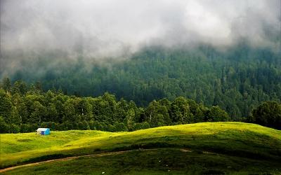 Yüzde 16'sı Türkiye ormanlarında