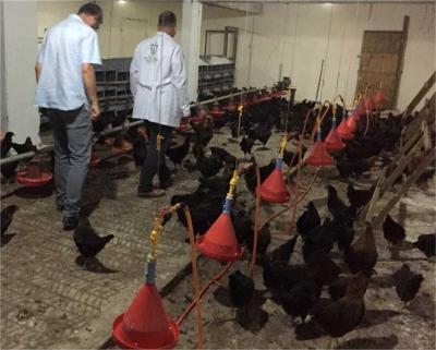 yüzde  50 hibeli gezen tavuk desteği